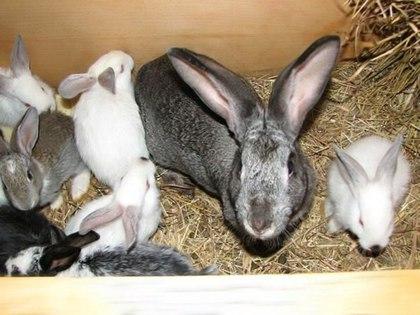 Подробная инструкция по выделке шкур кроликов