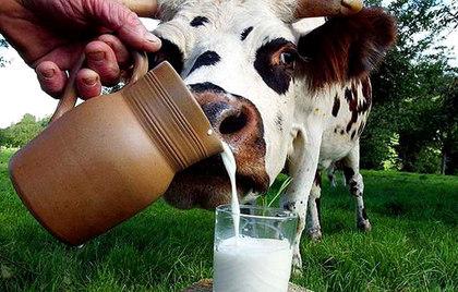 Как отличить настоящее качественное молоко от порошкового?