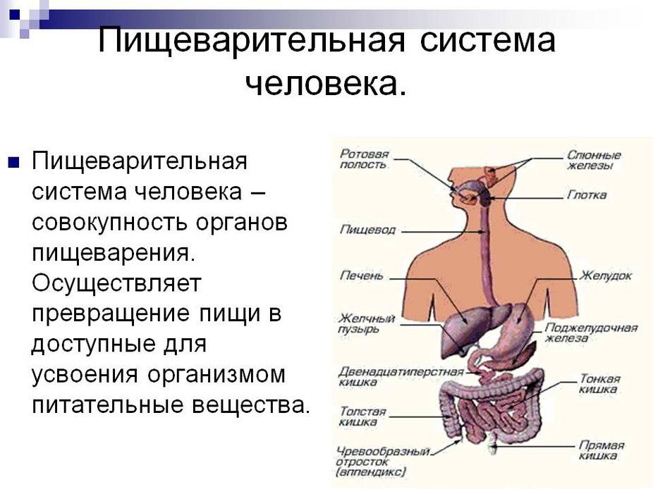 система очищения от паразитов