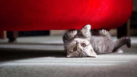 Учим кошку правильно обращаться с мебелью