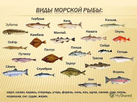 Рыбная косичка под сливочным соусом