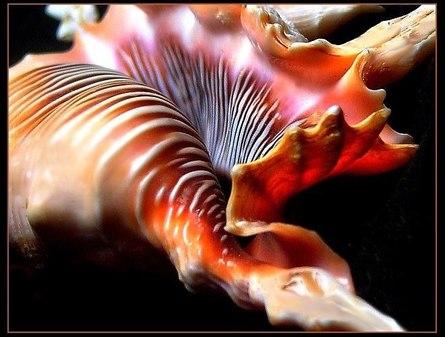 Самый эффективный способ почистить желудочно-кишечный тракт: Шанкх-Пракшалана