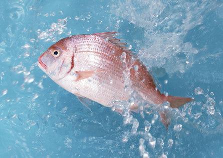 Способы кратковременного и долгосрочного хранения рыбы