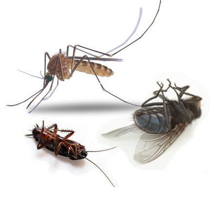 Природные средства от комаров, клещей и других насекомых
