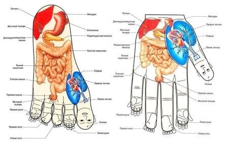 Определяем уровень здоровья по органам чувств