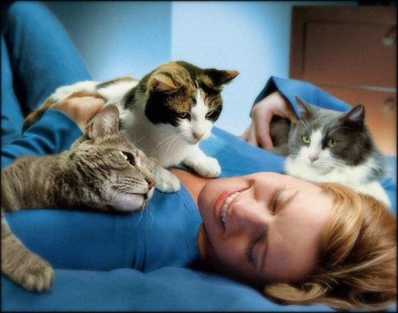 зачем кошка ложится на руку Чебоксарах (Чувашская