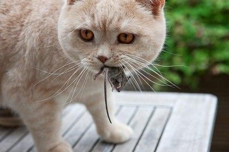 Чем полезны кошки в доме?