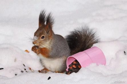 Обед на снегу