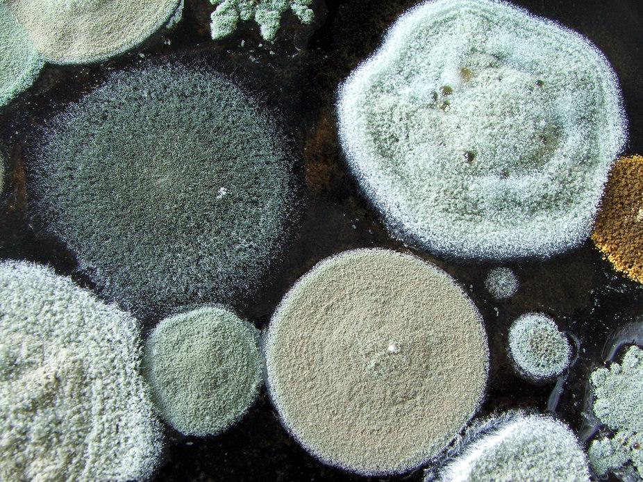 Чем отстирать плесень с ткани?