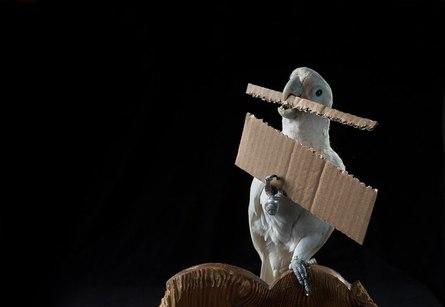 Что мы знаем о птичьем интеллекте?