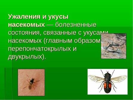 Об укусах насекомых и первой помощи при укусах